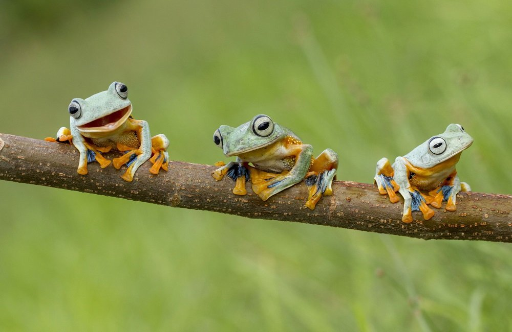 Different Style Frogs Photography (9)