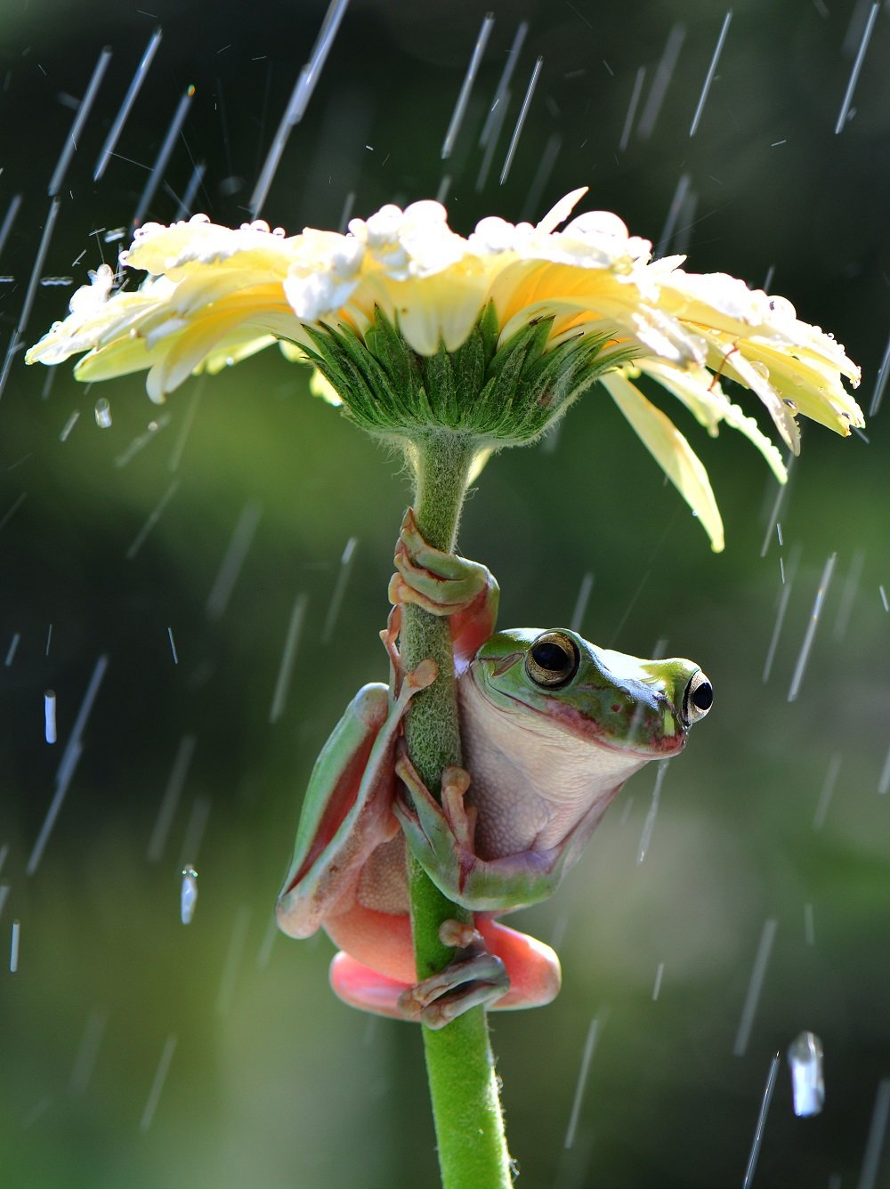 Different Style Frogs Photography (5)