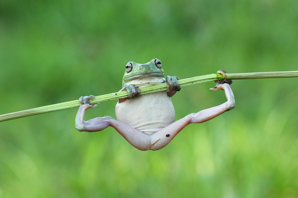 Different Style Frogs Photography (2)