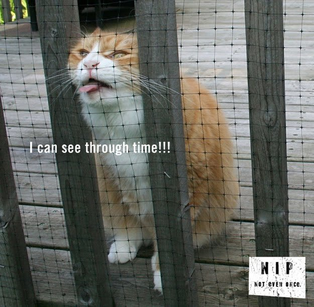Funny Cat Pictures (32)