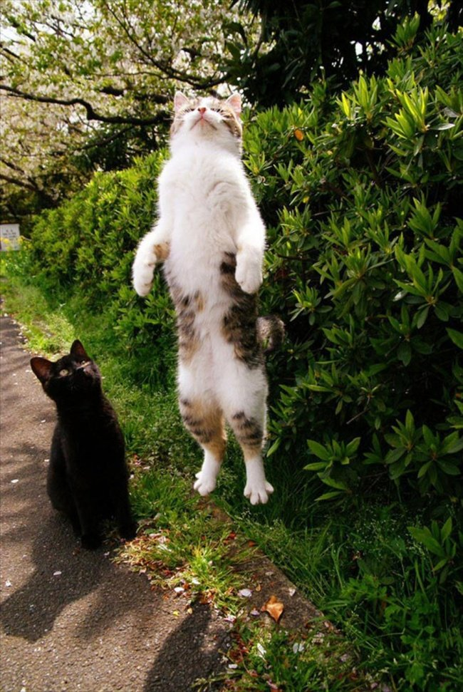Funny Cat Pictures (24)