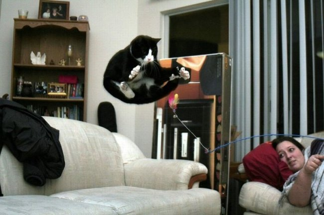 Funny Cat Pictures (19)