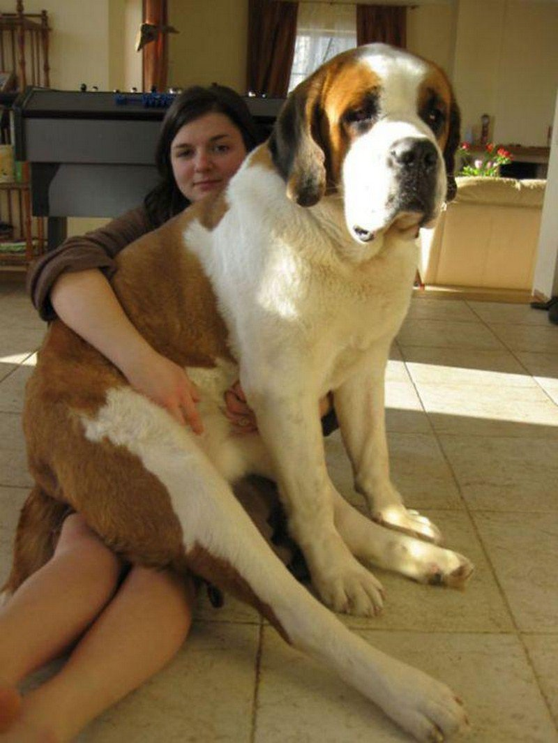 A Large Dogs With Love People (9)
