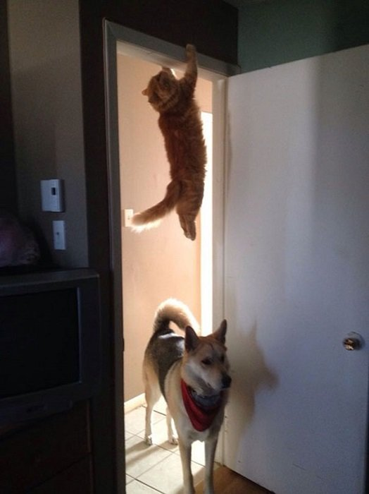 Funny Cat Pictures (8)