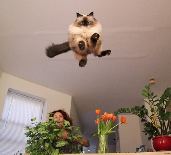 Funny Cat Pictures (6)
