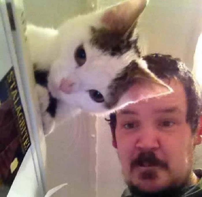 Funny Cat Pictures (4)