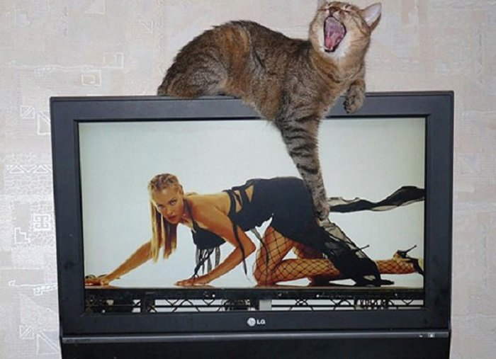 Funny Cat Pictures (3)