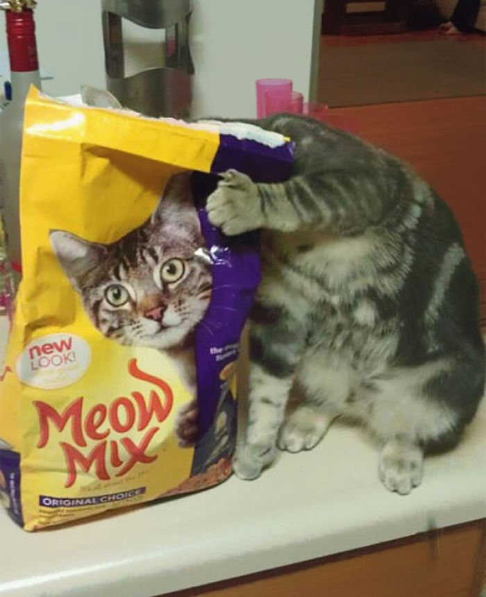 Funny Cat Pictures (13)