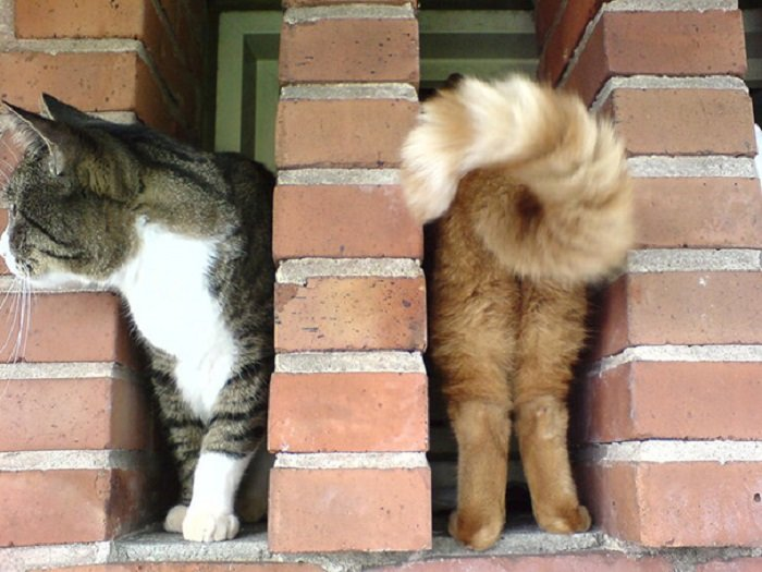 Funny Cat Pictures (11)