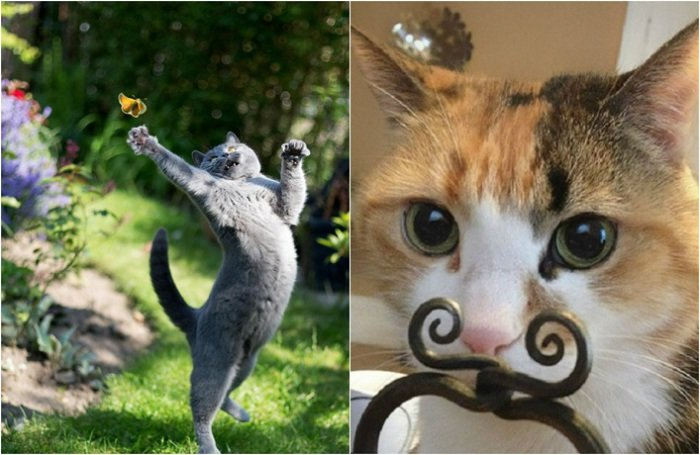 Funny Cat Pictures (18)