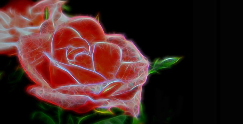 world's first electronic 'cyborg' rose (4)