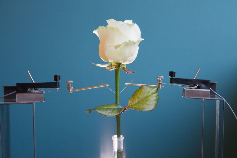world's first electronic 'cyborg' rose (3)