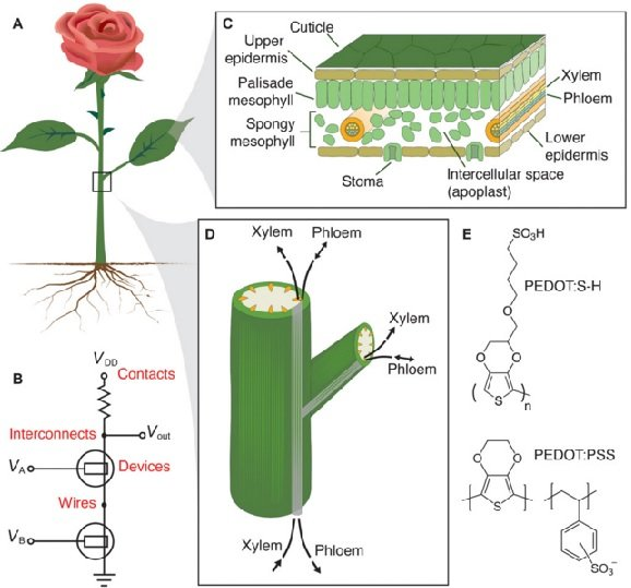 world's first electronic 'cyborg' rose (6)