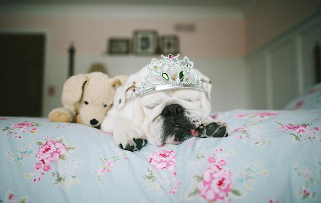 Animal Friendship Portraits (11)