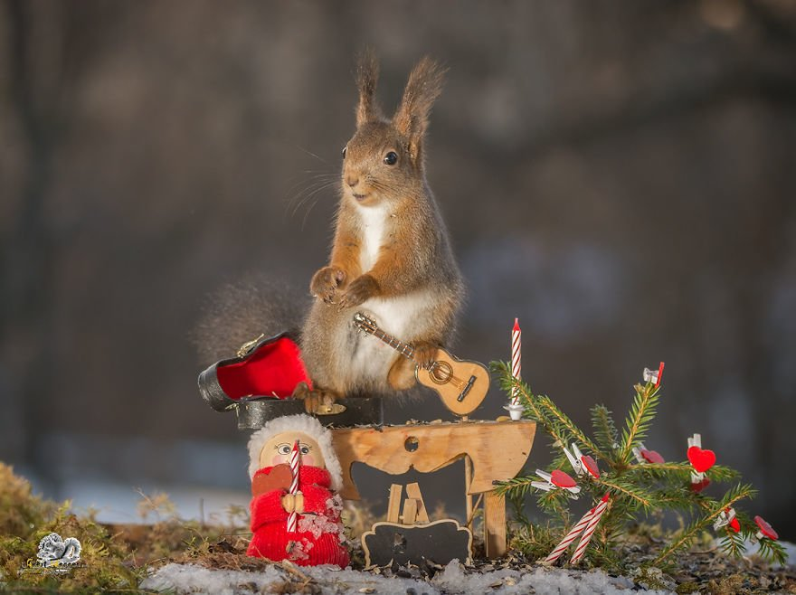 Celebrate Christmas with Squirrels (14)