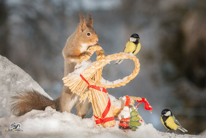 Celebrate Christmas with Squirrels (13)