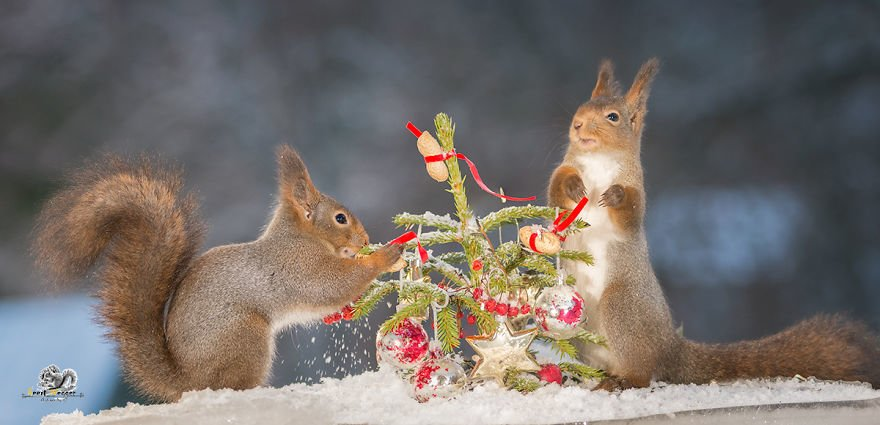 Celebrate Christmas with Squirrels (12)