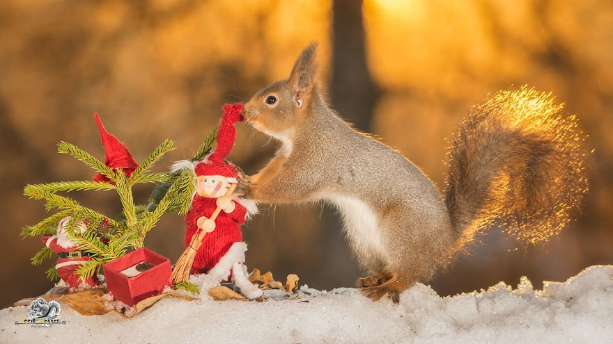 Celebrate Christmas with Squirrels (11)