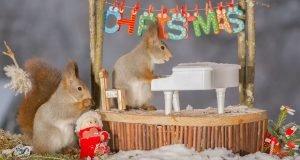 christmas-piano-concert-58557a44ea7e1__880