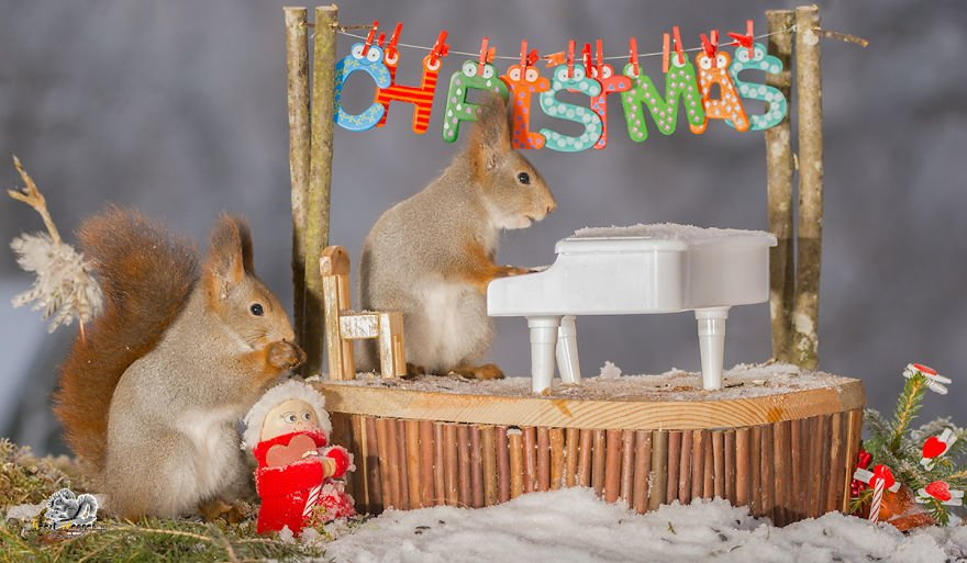Celebrate Christmas with Squirrels (9)