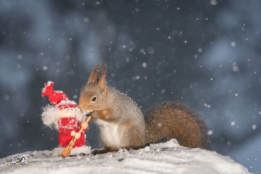 Celebrate Christmas with Squirrels (7)