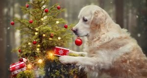 i-photograph-my-dog-mali-enjoying-christmas-time-12__880