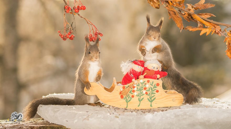 Celebrate Christmas with Squirrels (6)