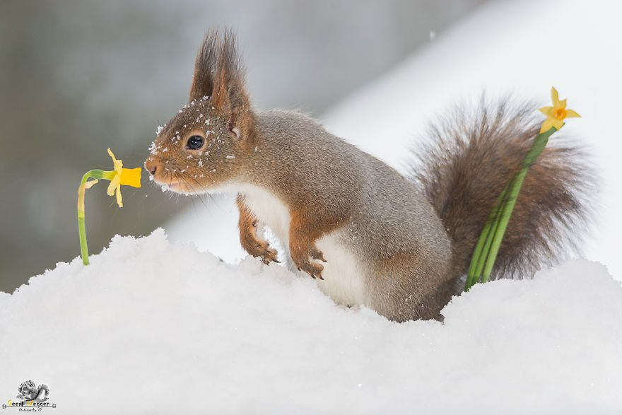 Celebrate Christmas with Squirrels (5)