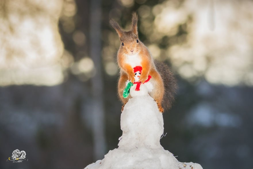 Celebrate Christmas with Squirrels (4)