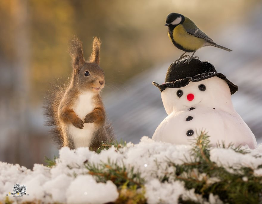 Celebrate Christmas with Squirrels (3)
