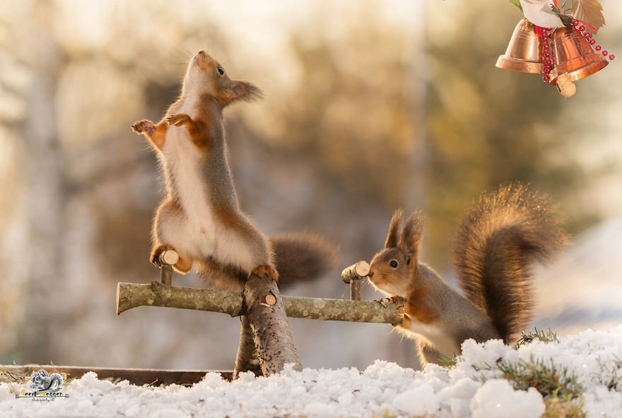 Celebrate Christmas with Squirrels (2)
