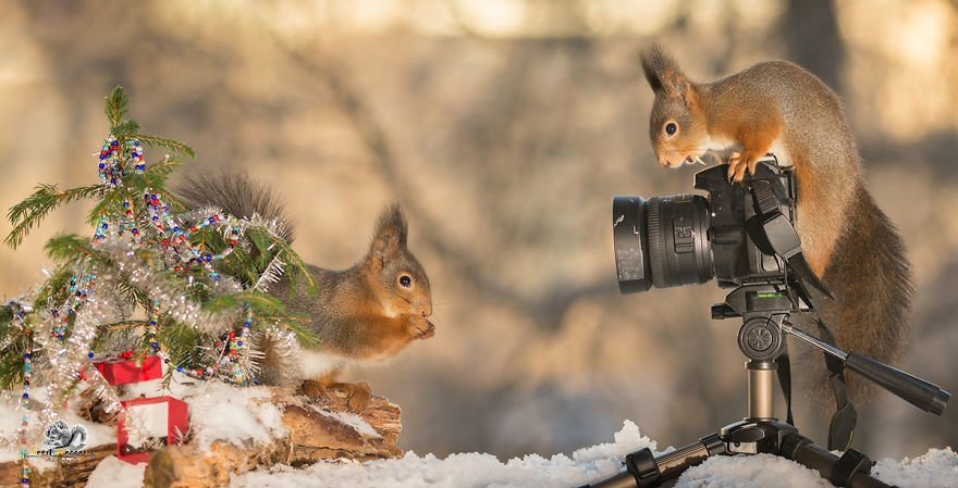 Celebrate Christmas with Squirrels (1)