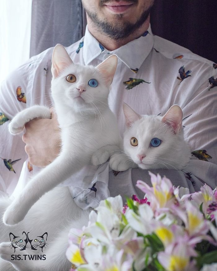 Heterochromatic Eyes Cat (4)