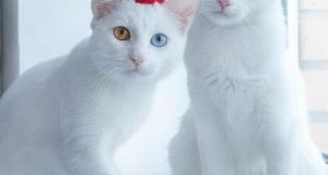 white_cats10